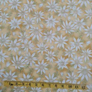 Under the Australian sun flannel flowers yellow